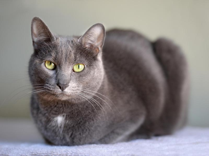 45 Cat Breeds With the Friendliest Personalities | FamilyMinded