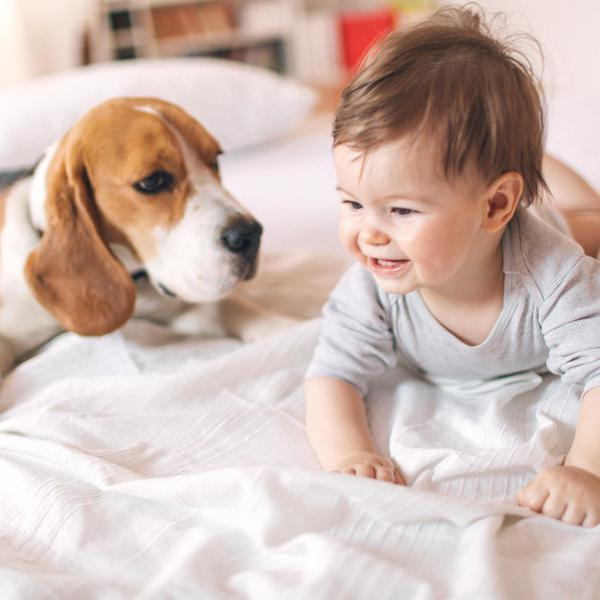 The Best Dog Breeds for Babies