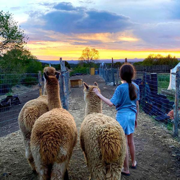 The Absolute Coolest Farm Stays in the U.S.