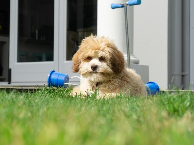The Best Small Dog Breeds | FamilyMinded