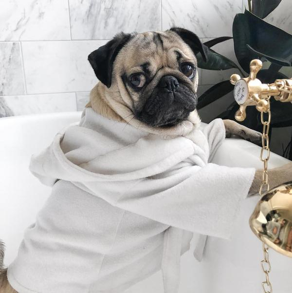 The Most Popular Dog Accounts on Social Media