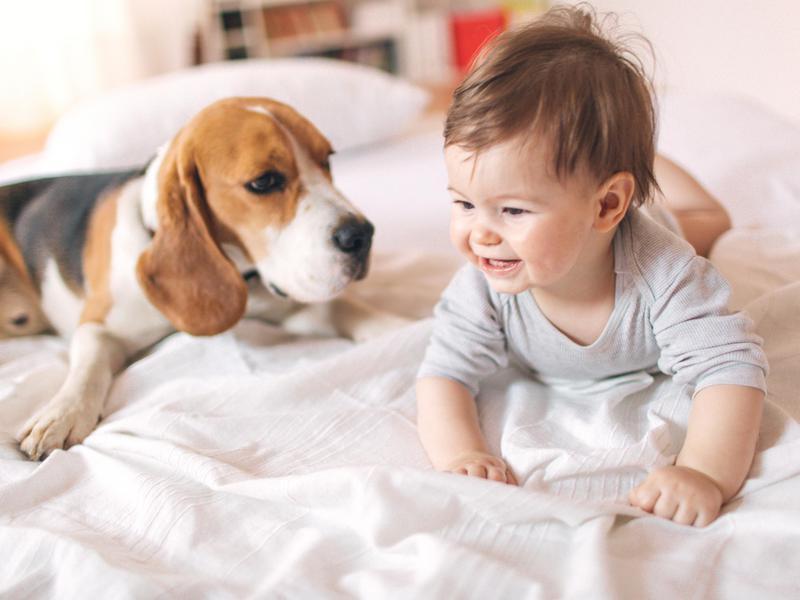 The Best Dog Breeds for Infants | FamilyMinded