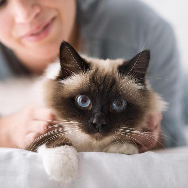 The 25 Most Popular Cat Breeds