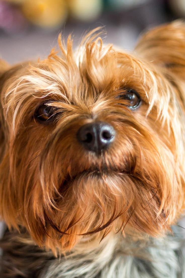 50 Best Small Dog Breeds | FamilyMinded
