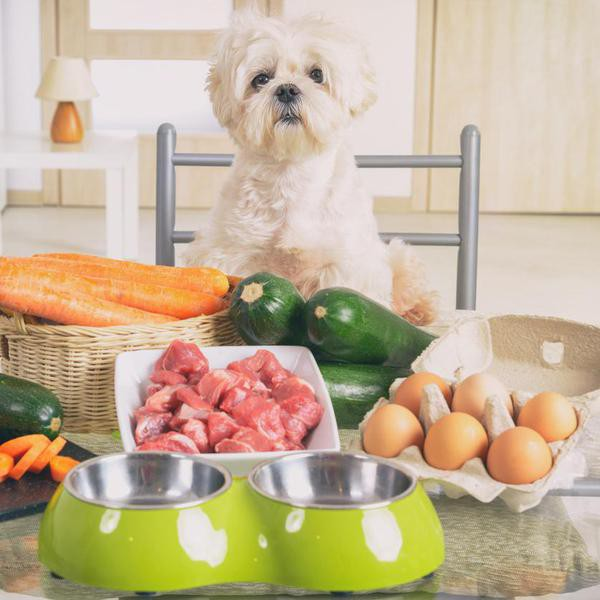 Homemade Dog Food Recipes You Could Eat, Too