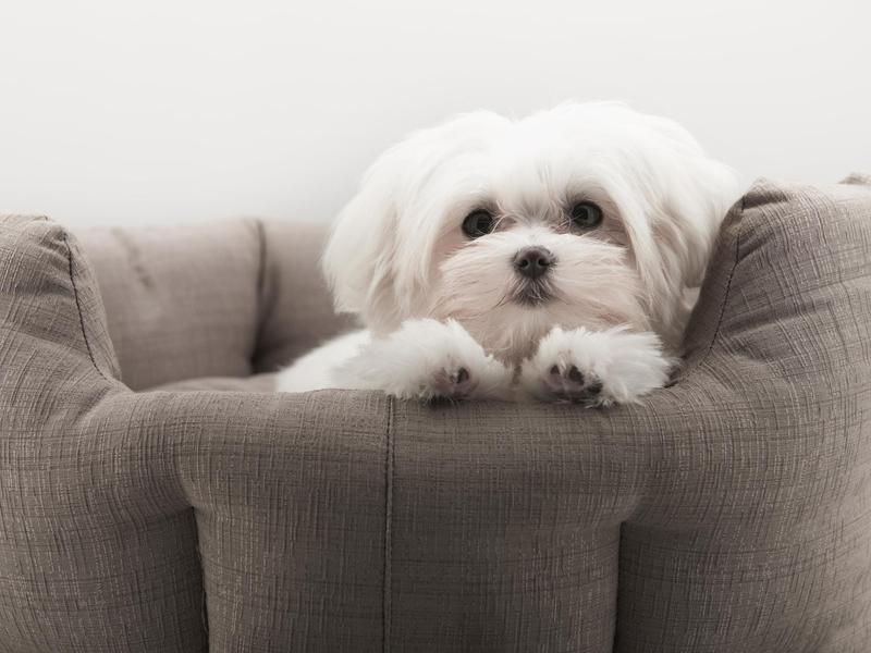 Bow Wow! The Longest Living Dog Breeds | FamilyMinded