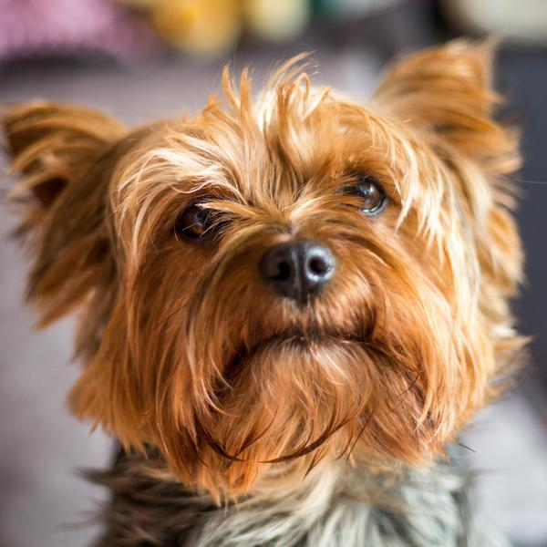 50 Best Small Dog Breeds