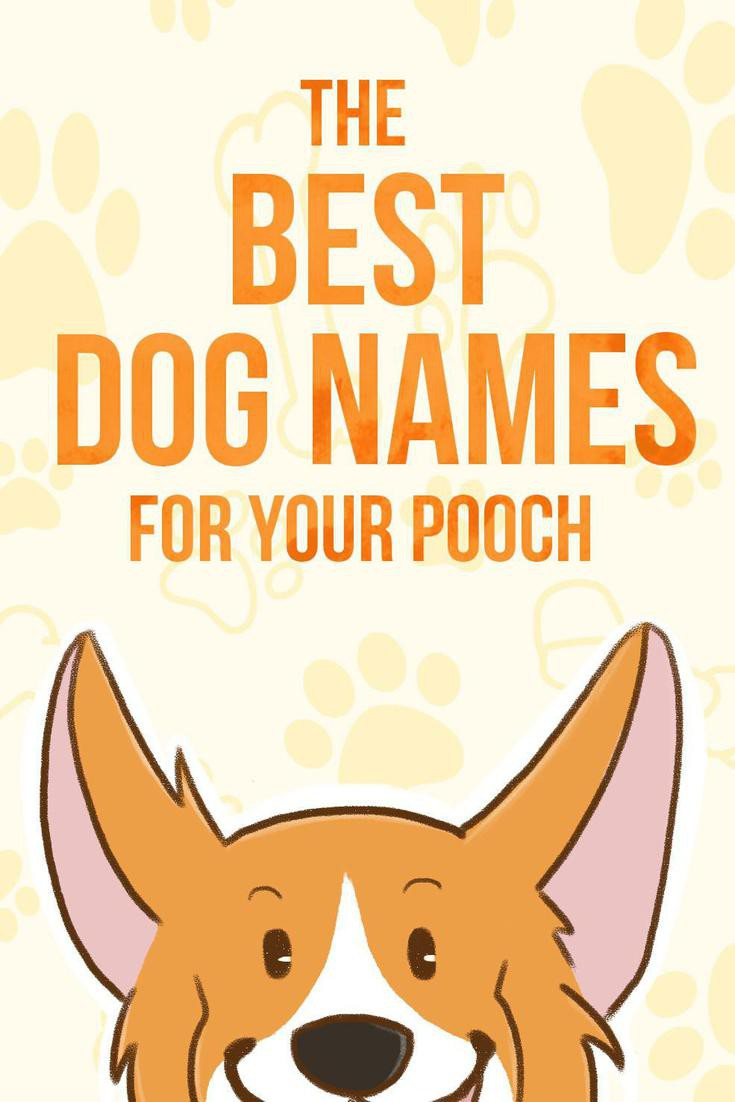 The Best Dog Names for Your Pooch | FamilyMinded