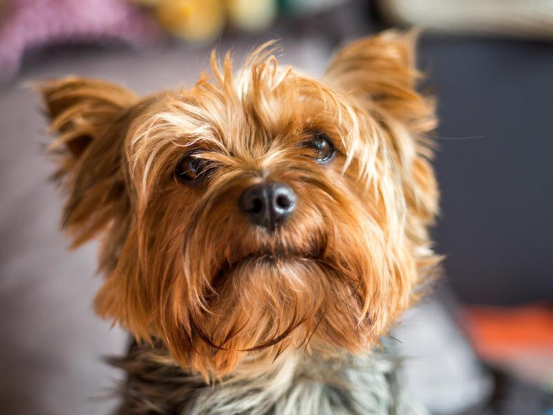 Best Small Dog Breeds Familyminded