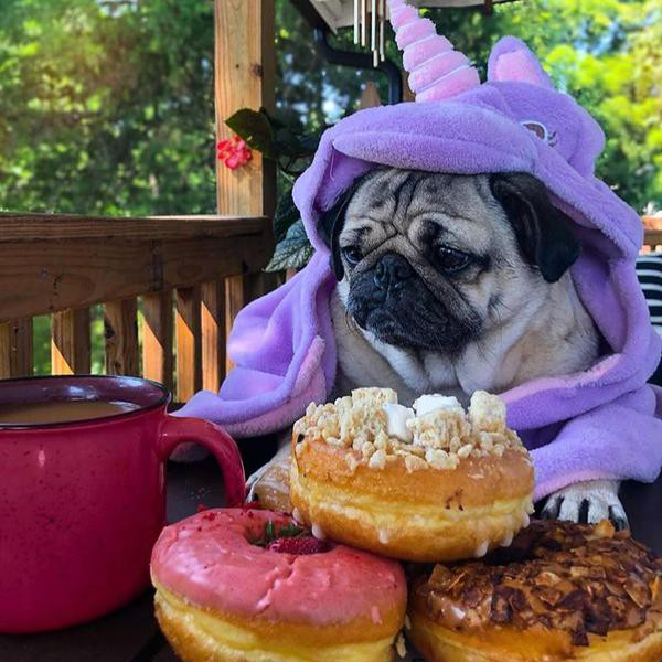 These Dogs of Instagram Will Make You Chuckle