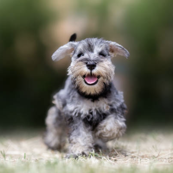 The Best Dog Names for Your Pooch