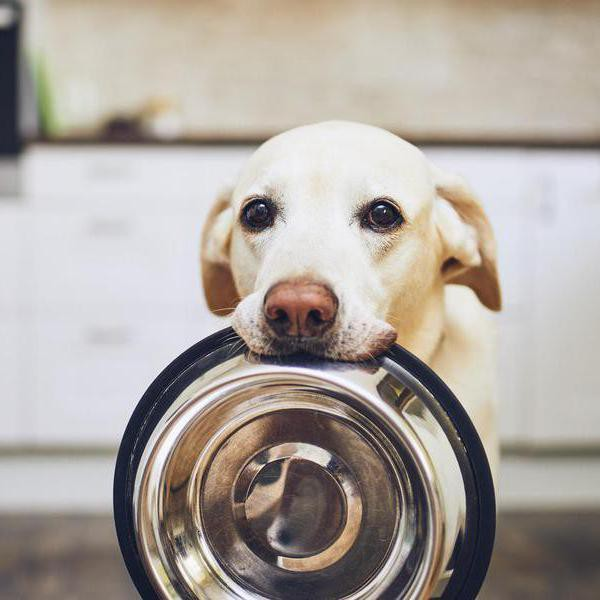 10 Best Online Pet Food Delivery Services